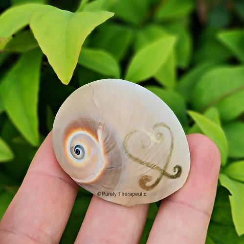 Snail Shell Love Talisman (C)