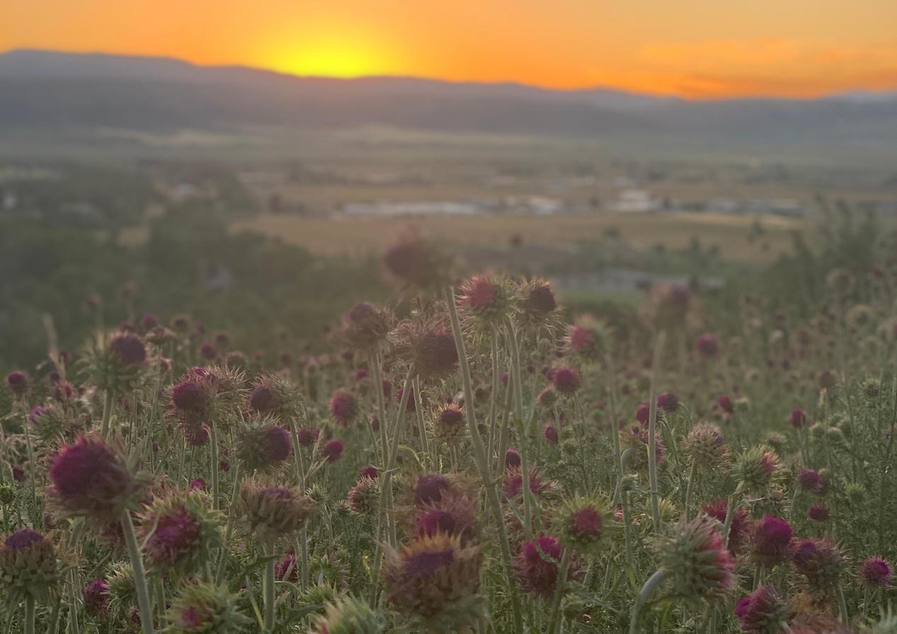 Afton-sunset