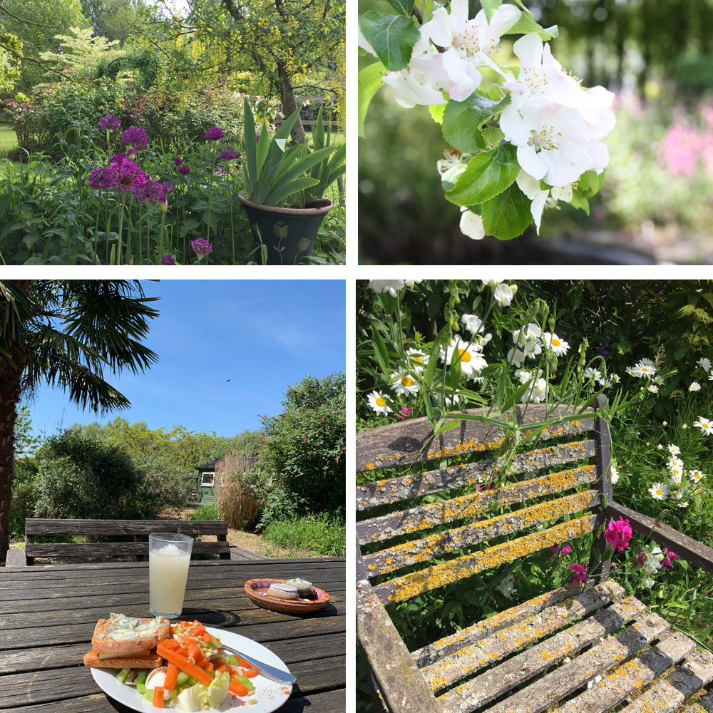 Enjoy lunch in the tranquil and relaxing setting of the Blended Monkey gardens