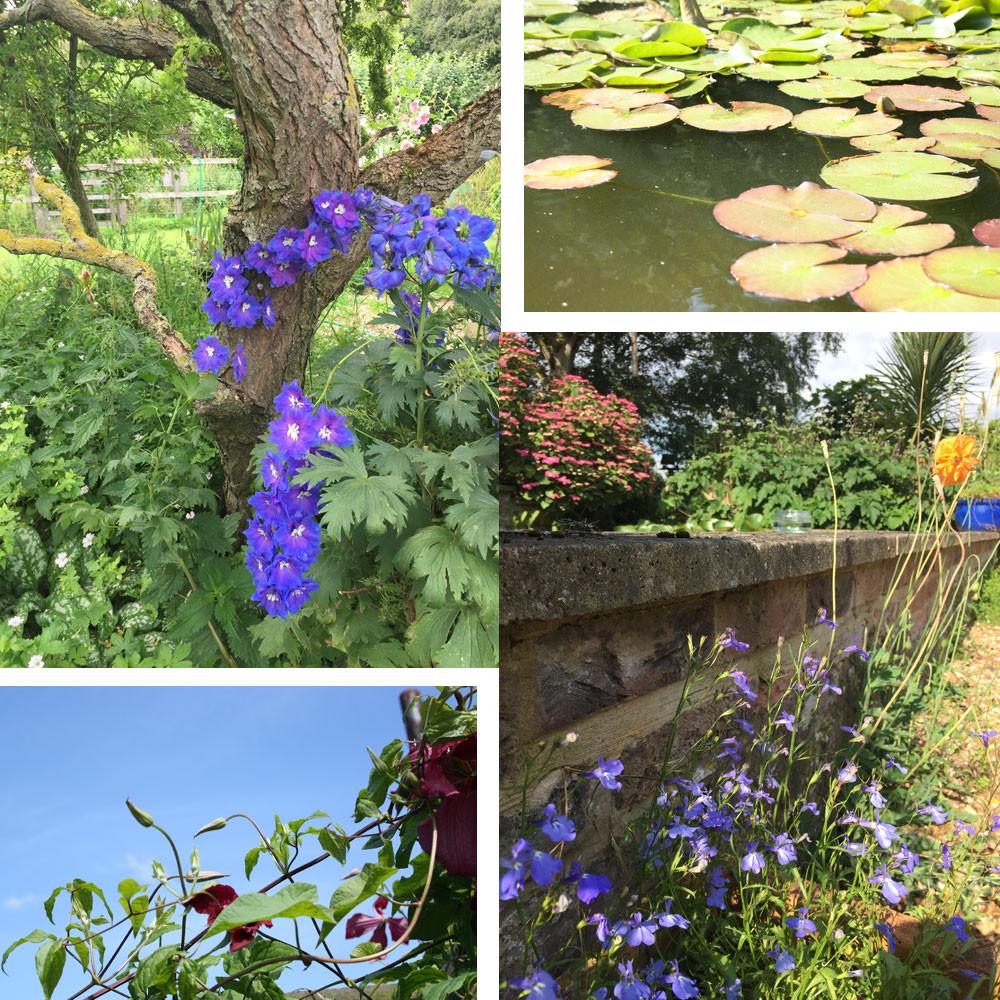 Our Blended Monkey gardens