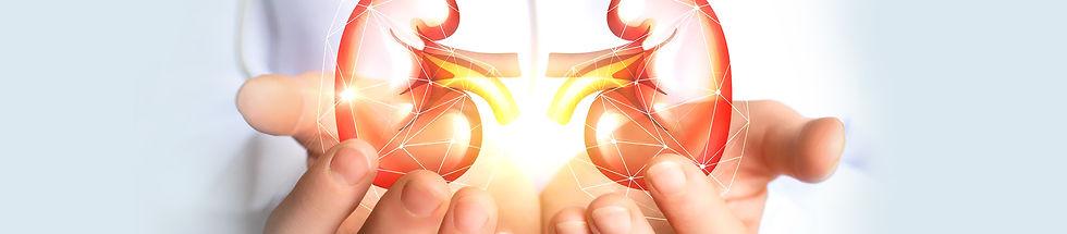 Kidneys-in-hand-1.jpg