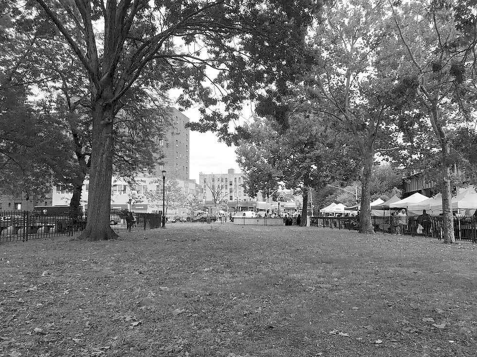 Open air farmers market in the Bronx