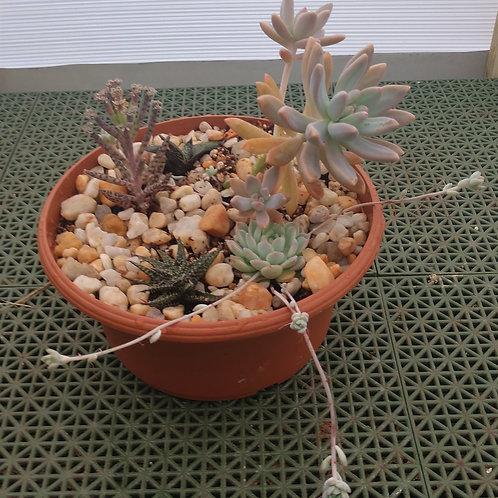 Succulent Bowl3