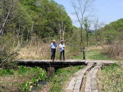 斑尾沼の原湿原20170521
