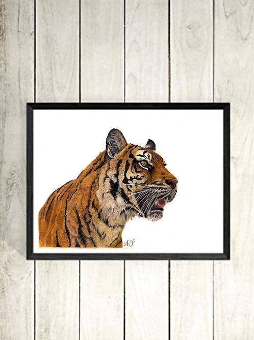 Eye of the Tiger PRINT