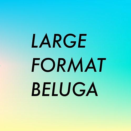 LARGE FORMAT BELUGA