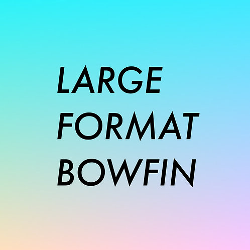 LARGE FORMAT BOWFIN