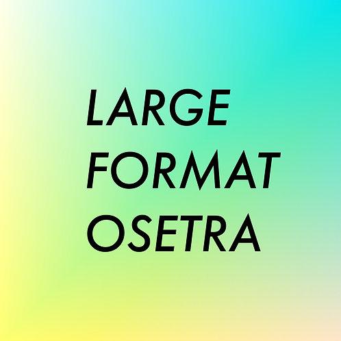 LARGE FORMAT OSETRA