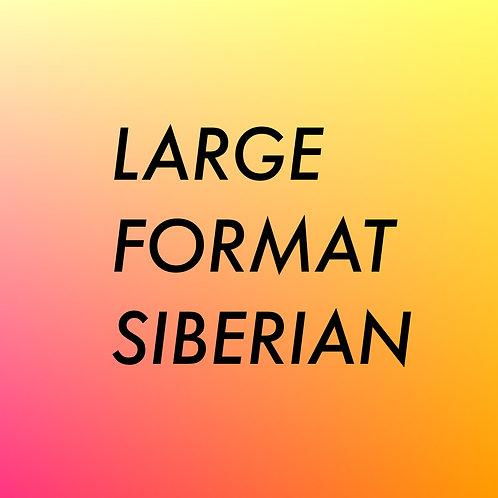LARGE FORMAT SIBERIAN STURGEON