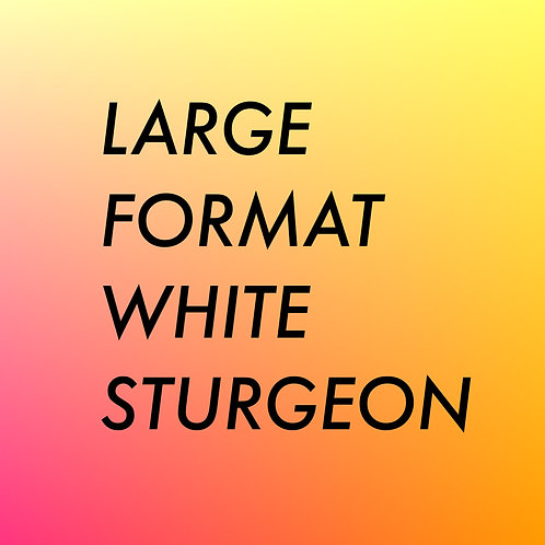LARGE FORMAT ROYAL WHITE STURGEON