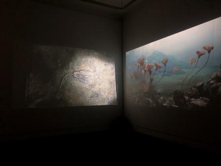 "New work ""Desiring Unspeakable Entropy"" in ""Desire"" exhibition, Irish Museum of Modern Art, Dublin"