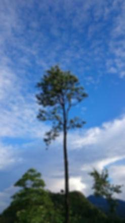 arbre sri lanka.jpg