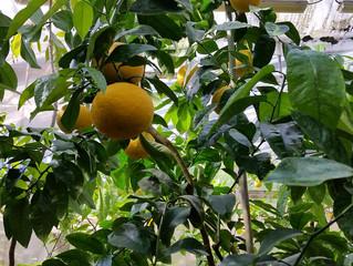 Замороженные фрукты и овощи – хороший источник витаминов зимой