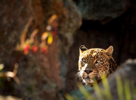 Especies en peligro de extinción. El tiempo que quizá nunca ha de llegar.