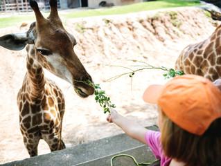 Los zoológicos: ¿garantía de protección para los animales?