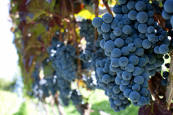 #ChiWineChat:Willamette Valley Pinot