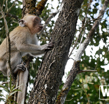 Saison 1 Episode 6 - Ile Maurice - Macaques