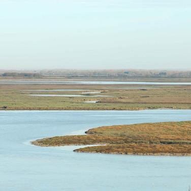 Saison 2 - La Baie de Somme et sa biodiversité