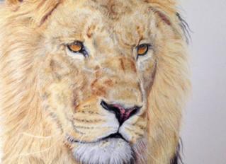 Lion portrait finished