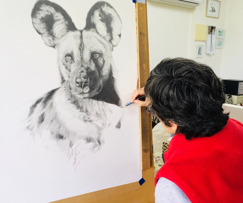 Kate-Jenvey-african-wild-dog-drawing