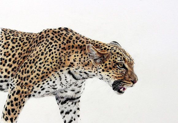 'Stride of the Leopard'-SOLD