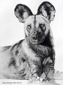 KateJenvey-wilddog-pencil.jpg