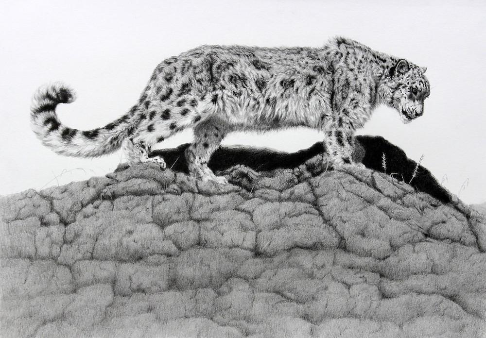 snow leopard w.jpg