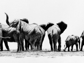 ART AND THE ANIMAL