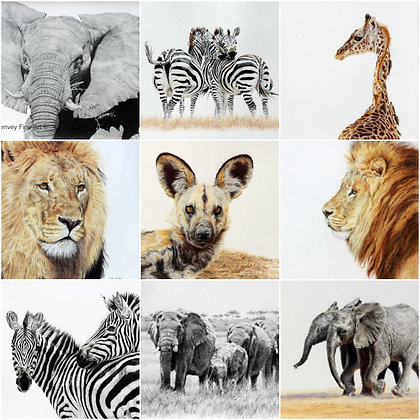 Greeting Cards-African wildlife