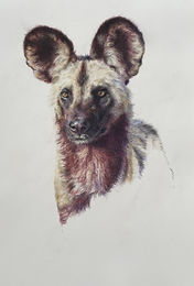Kate-Jenvey-wild-dog-drafting-film.jpg