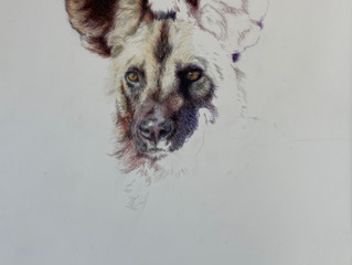 Coloured pencil on drafting film
