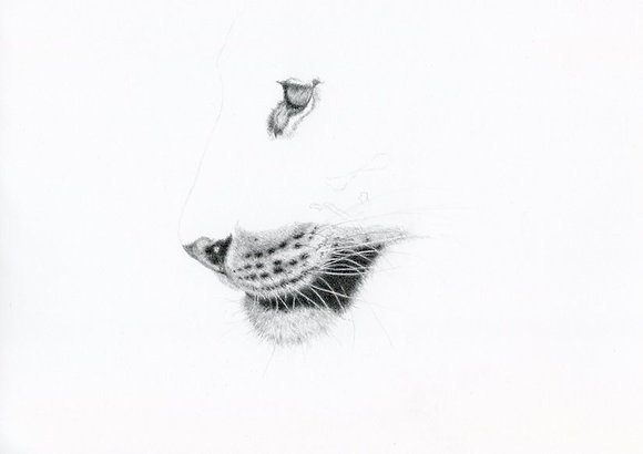 Step by step tutorial-drawing whiskers