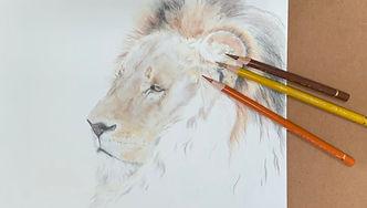 Kate-Jenvey-coloured-pencil-lion.jpg