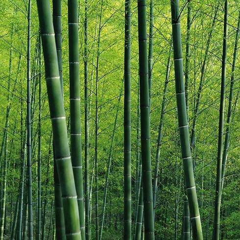 1979AS-Bamboo-Jungle-thumb__16483.144750