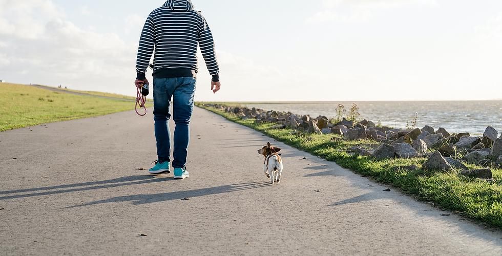 Hund, Urlaub mit Hund, Campingurlaub, Nordsee, Spaziergänge, Familienhund, Hunde erlaubt