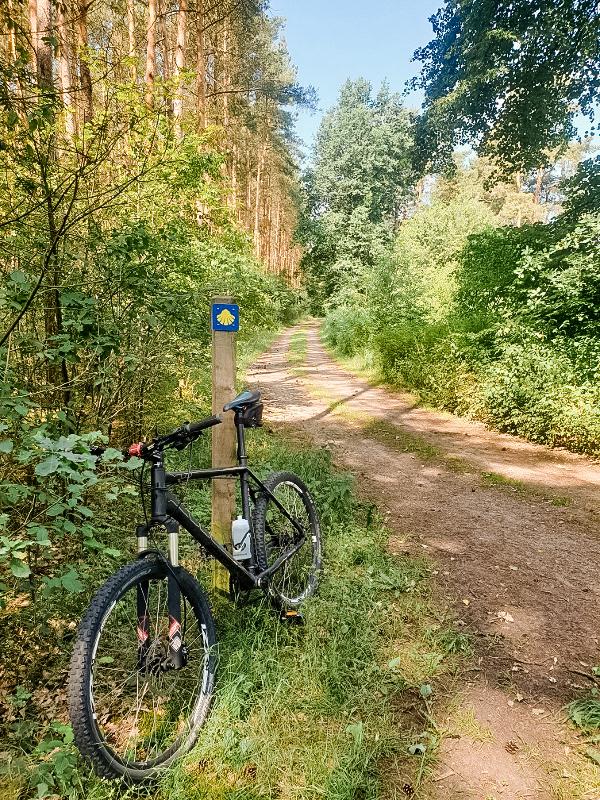Campingpark Südheide, Ausflüge, Region, Waldweg, Natur, Fahrradtour