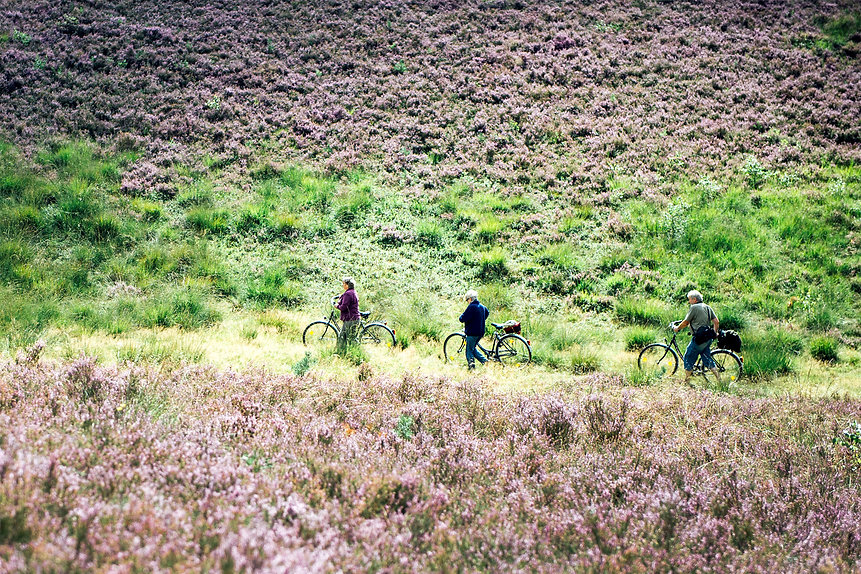 Südheide entdecken, Wanderwege, Radwege, Radtour, Campingpark Südheide