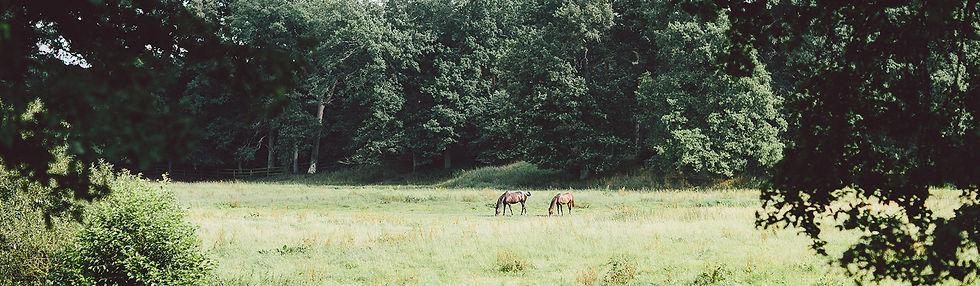 camping urlaub, campingplatz, campingpark Südheide, familien urlaub, erholung, natur, ruhe, naturschutz, nachhaltigkeit, eco camping, ökocamping, urlaub mit kindern und hund, wandern, radfahren, lüneburger heide, ökologisch campen