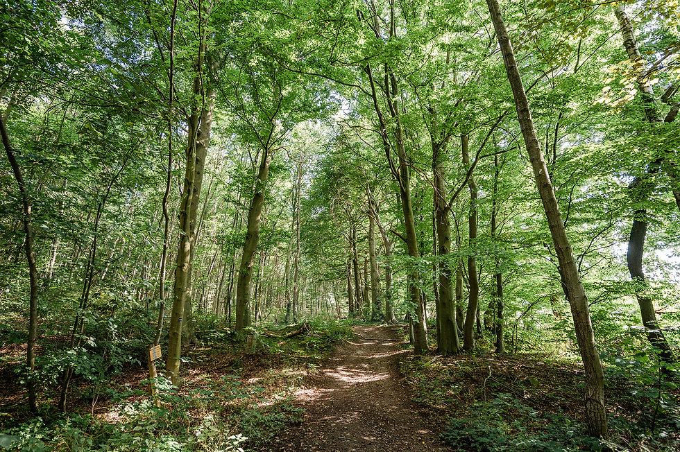 Campingpark_Kalletal_Wanderung_Elfenborn