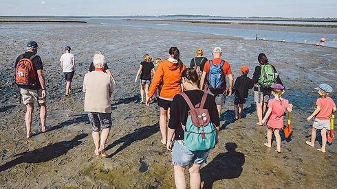 Wattwanderung, Wattenmeer, Nordseecamping