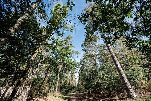Campingpark Südheide, Ausflüge, Wanderung, Radtour, Winsener Heide