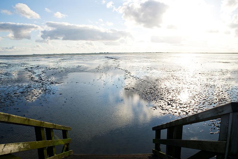 Watt, Wattenmeer, Husum, Urlaub in Nordfriesland, Nordseecamping zum Seehund