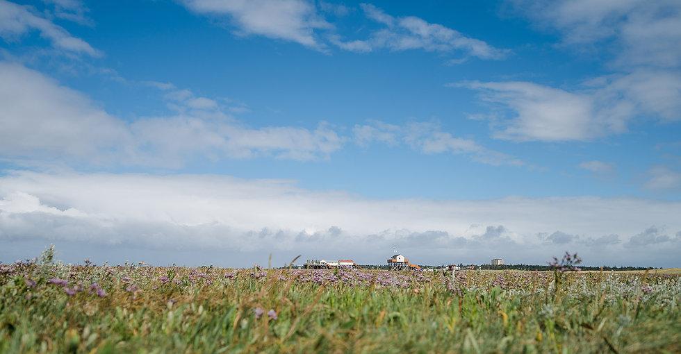 Nordseecamping_zum_Seehund_Dünen_St-Peter, Nordseecamping zum Seehund, Urlaub in Nordfriesland