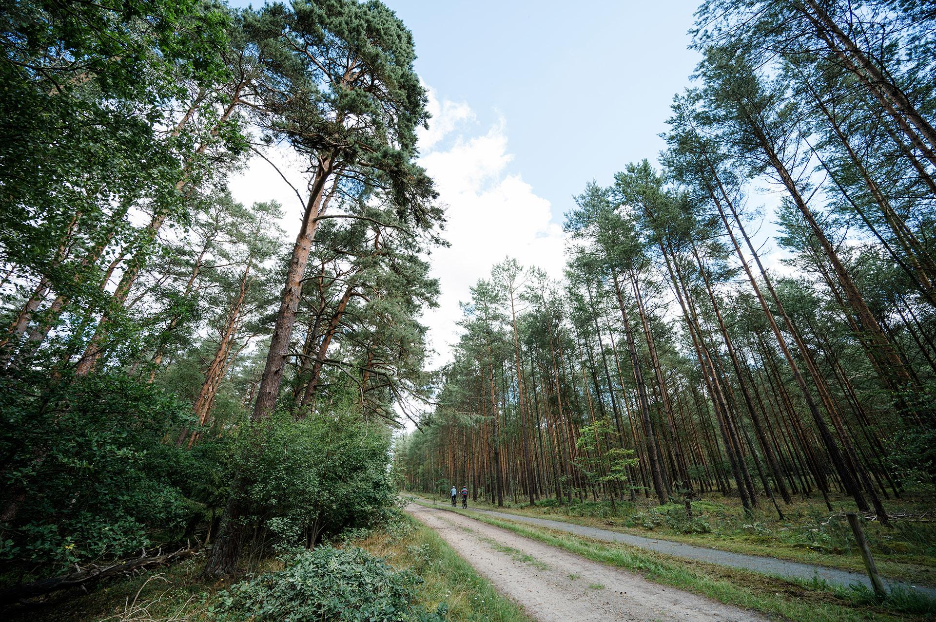 Campingpark Südheide, Wanderweg, Ausflug, Wanden, W17