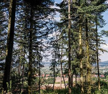 Campingpark_Kalletal_Wanderung_Kirchberg