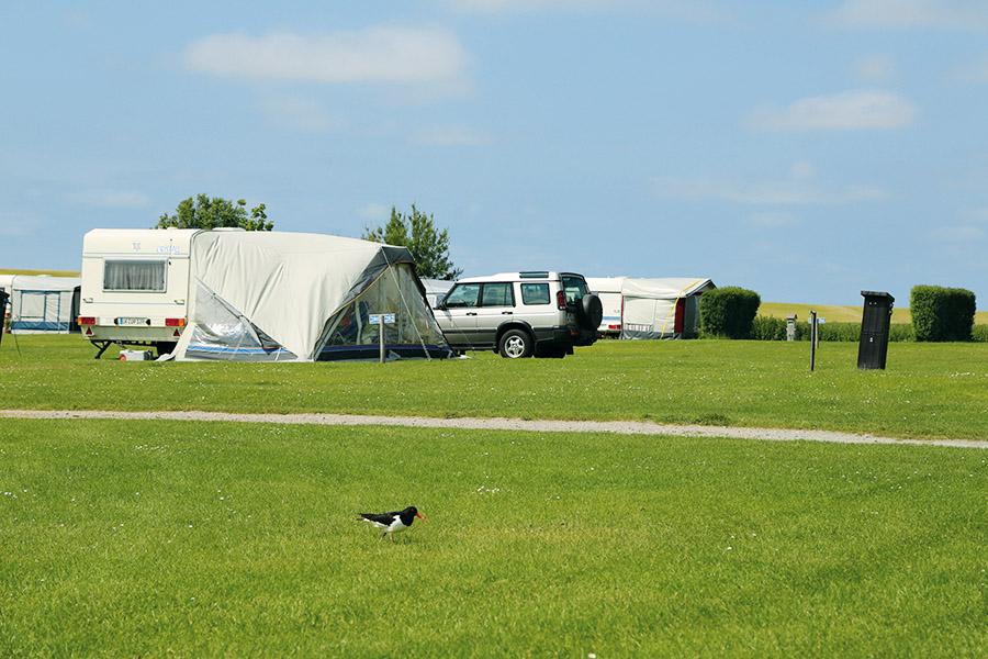 Camping am Deich, Stellplatz, Wiese, Zelt