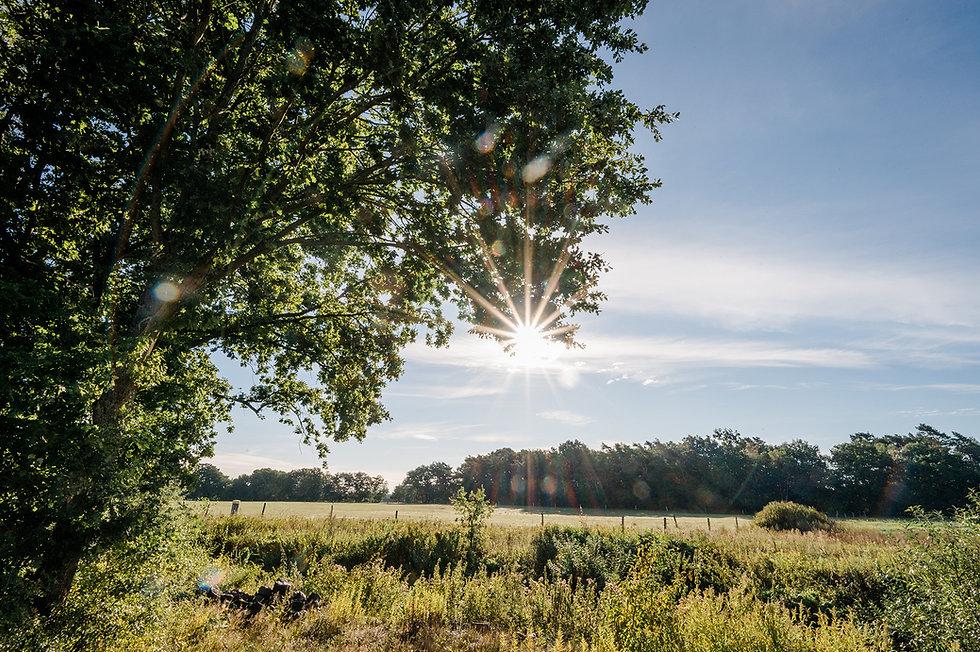 Ausflugsziele, Campingplatz,   Lüneburger Heide, Naturerlebnis, Pilgerweg, Jacobusweg, Wandern, Campingpark Südheide, Südwinsen, Radtour, Ausflug, Camping mit Kindern, Familienurlaub, erholung, natur entdecken, familien campingplatz