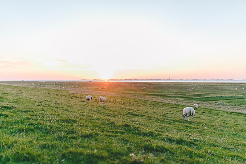 Nordsee, Nordfriesland, Region, Deich, Nordseecamping zum Seehund