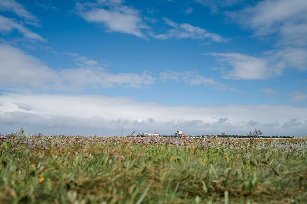 Nordseecamping_zum_Seehund_Dünen_St-Pete