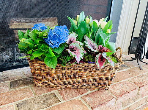 Basket with Blue Hydrangea, Begonia, and Pots of Blush Tulips